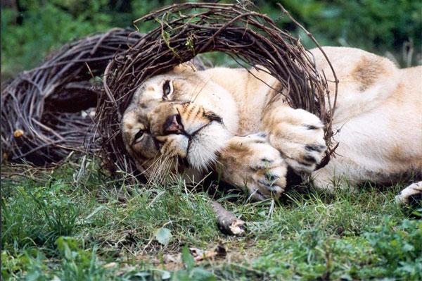 Formation intra entreprise Akongo soigneur zoo