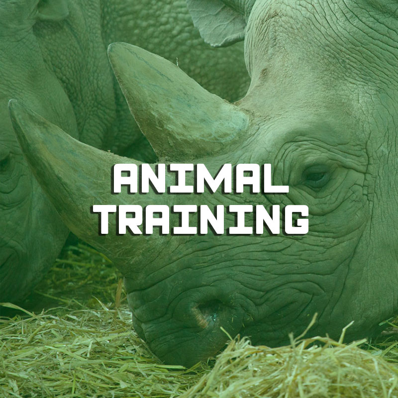 Formation animal training