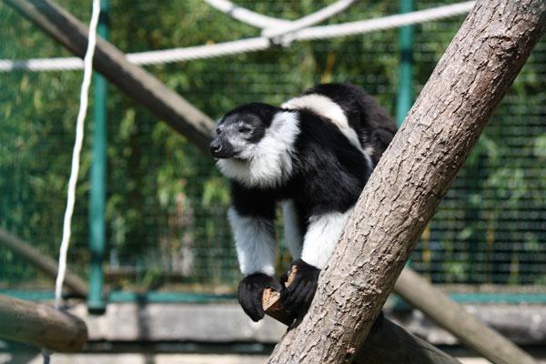 Aménagement enclos zoo